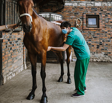 Tierärztin untersucht den Magen beim Pferd