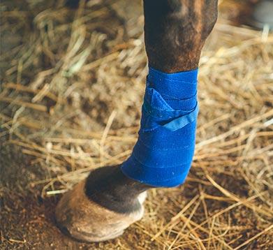 bandagiertes Bein beim Pferd