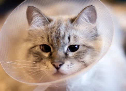 kastrierte Katze mit Plastiktrichter