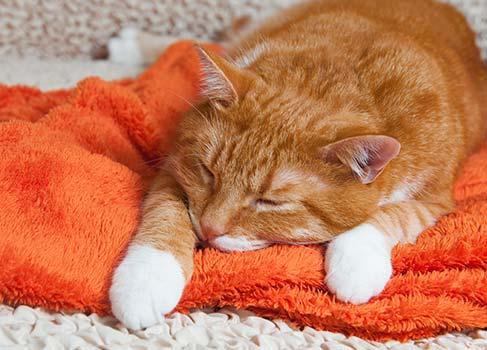 rote Katze liegt auf einer Decke