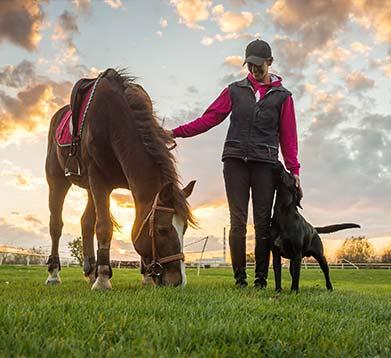 Hund und Pferd mit Besitzerin