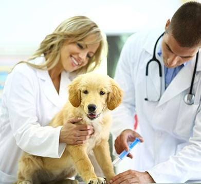 agila versicherung hund