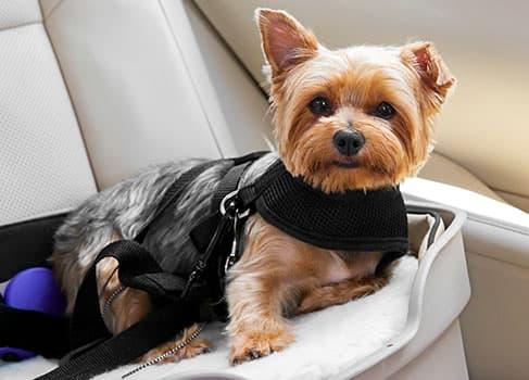 Der Hund fährt im Auto mit