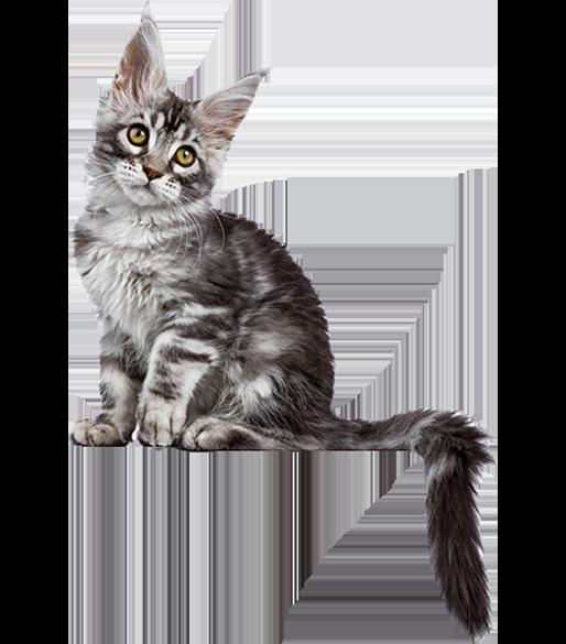 Kitten sitzt auf der Werbebox